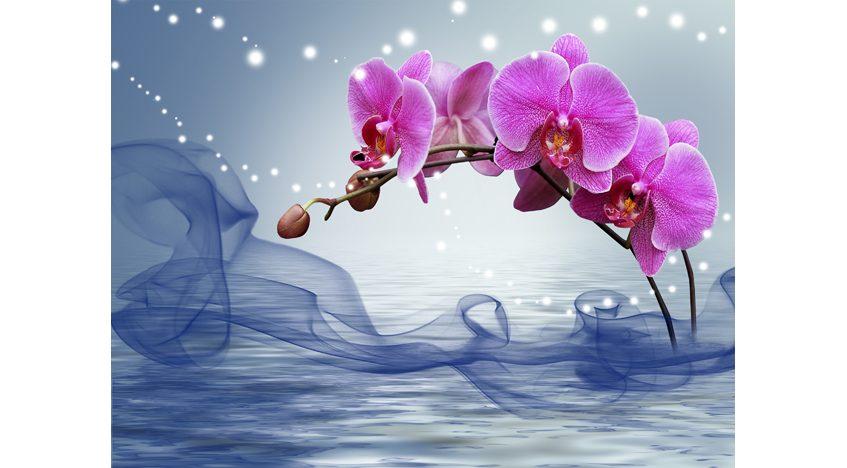Фотообои 3D Фиолетовая орхидея на воде
