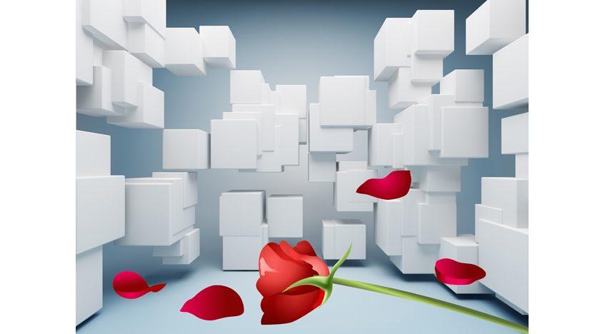 Фотообои 3D Белые кубы и красная роза