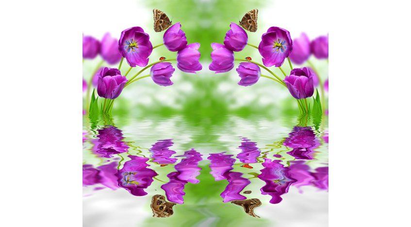Фотообои 3D Фиолетовые тюльпаны над водой