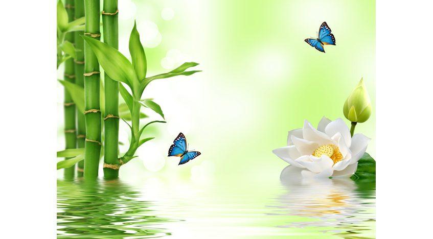 Фотообои 3D Бамбук и цветок лотоса
