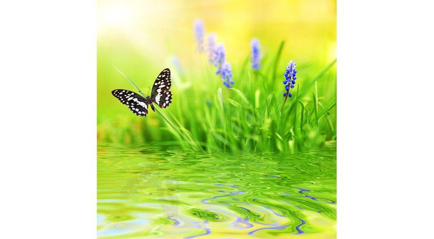 Фотообои 3D Бабочка над водой