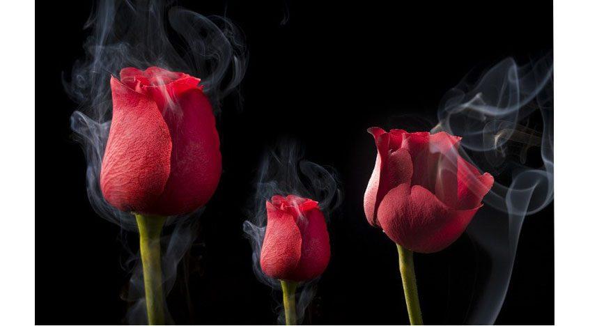 Фотообои 3D Три розы на черном фоне