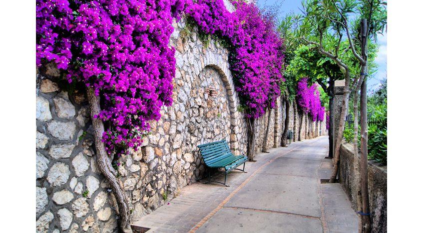 Фотообои Улица в цветах остров Капри